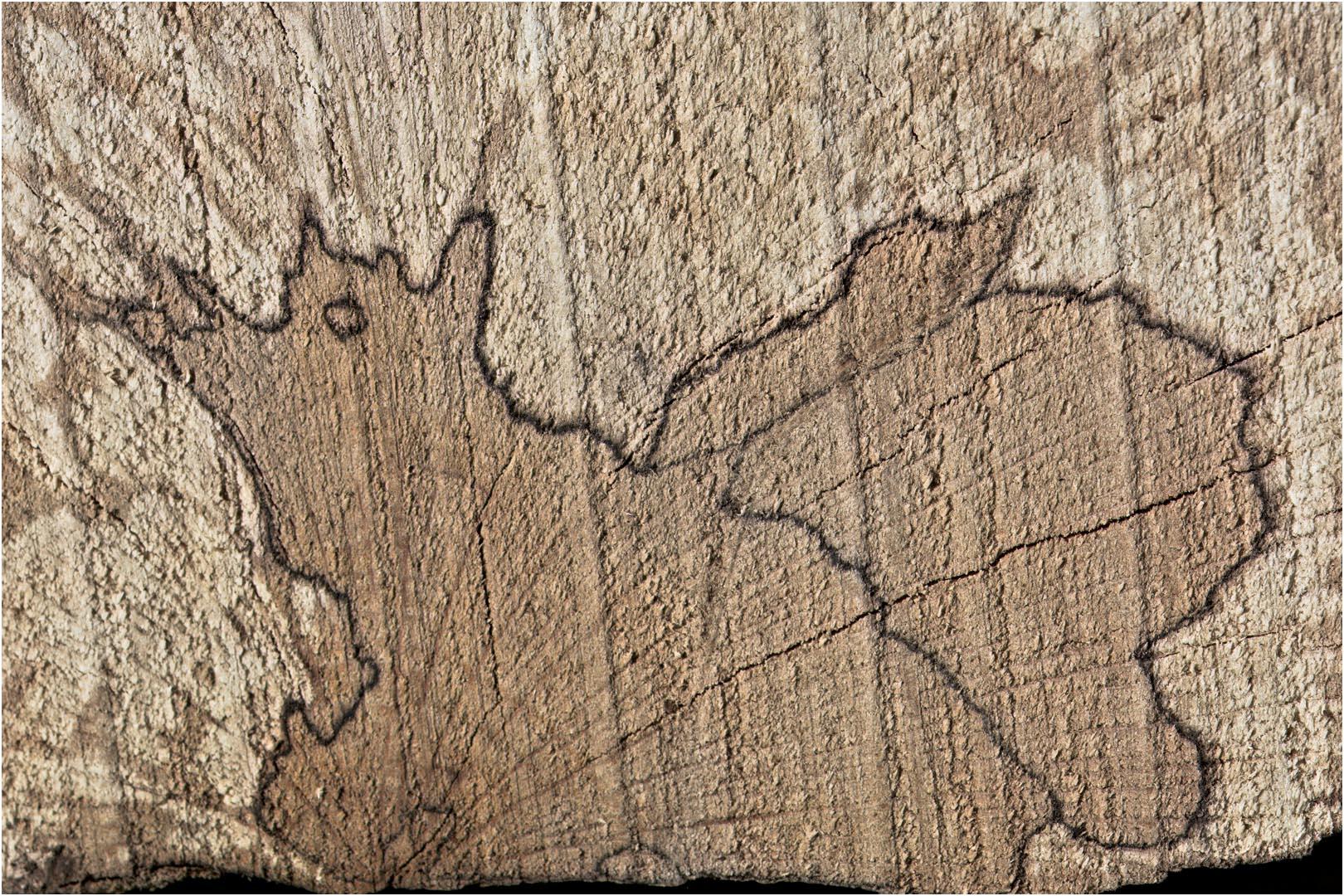 Vecoux – Mon tas de bois est habité !