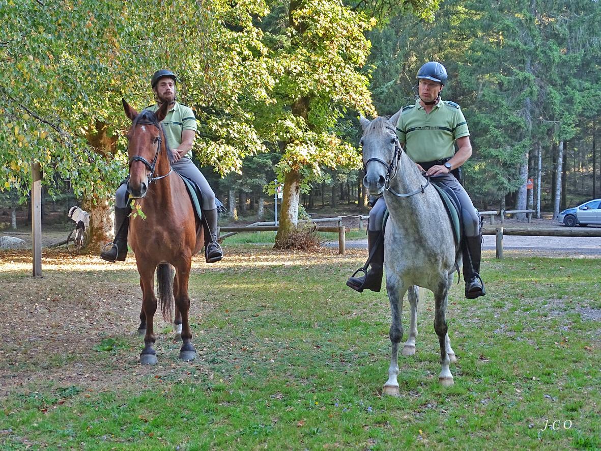 Remiremont – Les Brigades équestres de l'ONF sillonnent le terrain