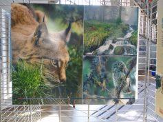 Expo 'Nature sur toute la ligne'21