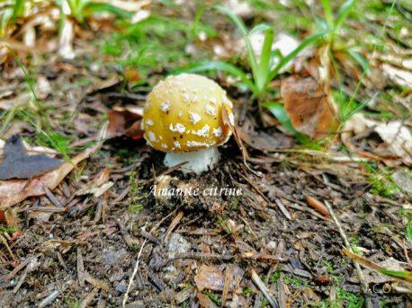 Premiers champignons 202102
