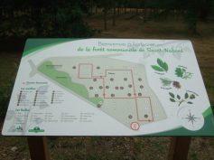 Vingt espèces de conifères et vingt et une autres concernant les feuillus sont recensées.